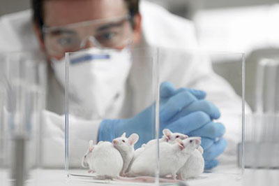 Dâm dương hoắc có khả năng khôi phục lại hoạt động của hệ thống miễn dịch trên mô hình nghiên cứu thực nghiệm trên chuột